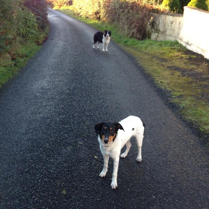 My canine companions.